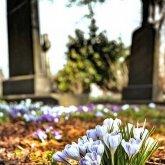 Алматинские кладбища временно закроют