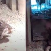 «Это психологическая травма»: крокодил съел котенка на глазах у посетителей зоопарка в Алматы