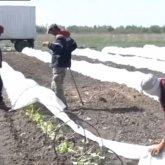 «Лучше работать с мигрантами»: в Атыраускую область завозят граждан Узбекистана