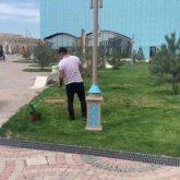 Газон в Туркестане не красили, а минерализировали – акимат