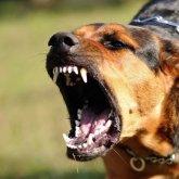 Собака съела своего хозяина в Шымкенте