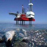 «Каспию грозит 100-процентная гибель донных организмов»: депутат раскритиковал проект нефтяников