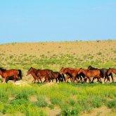 Казахстанские пастбища деградированы, сельчанам негде пасти скот – депутат