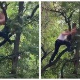 Почему пьяный казахстанец залез на дерево, рассказали в полиции