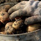 Почему взлетели цены на картофель в Казахстане, объяснил министр