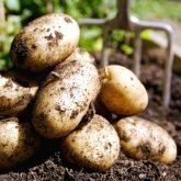 Виновными в «космических» ценах на картофель названы акиматы и Минсельхоз