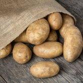 Картофель продается по цене от 120 до 200 тенге за килограмм – Минсельхоз