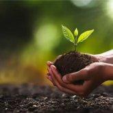 82 миллиарда тенге потребуется на высадку 2 миллиардов деревьев в Казахстане