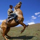 Мальчик упал с лошади и погиб в Павлодарской области
