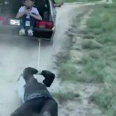 «Друг в беде не бросит»: туркестанец привязал приятеля к машине и протащил по земле