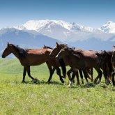 Выиграло ли казахстанское сельское хозяйство от распада Союза? Мнение