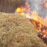 Новая беда пришла в страдающую от засухи и нехватки корма Кызылординскую область