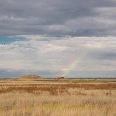 Свыше 250 тыс. га пастбищных земель не используются в Павлодарской области