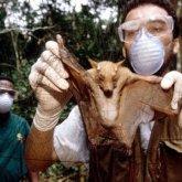Расследование происхождения коронавируса: ООН обратилась к Китаю
