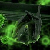 Ученый изменил свое мнение о происхождении коронавируса
