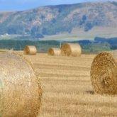 Вывоз сена из Казахстана запретят с 23 августа