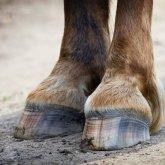 Лошадь убила ребенка в Мангистау