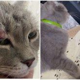 «Выбил дверцу и выскочил»: об удивительных приключениях кота рассказали в аэропорту Алматы