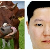 Павлодарец выдал обычных коров за племенных и незаконно получил госсубсидии