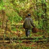 Ел ягоды и пил воду из водоемов: пропавшего акмолинца с потерей памяти нашли в лесу