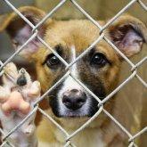 Арест до 50 суток и штраф до 2,9 млн тенге планируют ввести в РК за жестокое обращение с животными