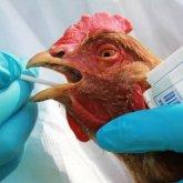Птичий грипп: еще одно село попало под карантин в Павлодарской области