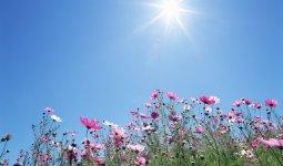 Ученые выявили влияние теплой погоды на распространение коронавируса