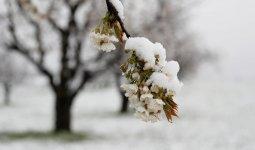 Похолодает на юге Казахстана