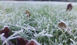 В пяти областях Казахстана ожидаются заморозки