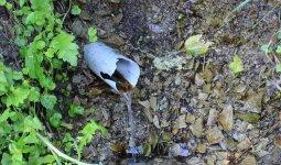 Экологи признали воду из родников непригодной для употребления в Костанае