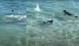 Тюленя закидали камнями в Актау