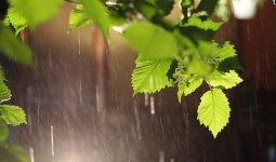 Дожди пройдут в Казахстане
