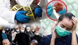Птичий грипп: врачи обратились к казахстанцам с рекомендациями