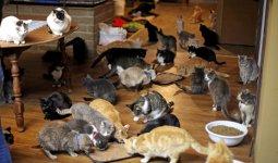 110 кошек приютил в квартире мужчина
