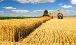 В Казахстане намолочено 18,2 млн тонн зерна
