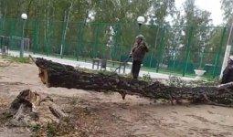 Чиновники объяснили вырубку леса на севере Казахстана