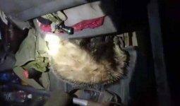 Лесник охотился на барсуков в Алматинской области