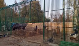 Строительство вольера для львенка Симбы завершают в Алматы