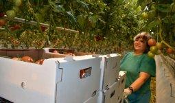 В Казахстане наблюдается рост инвестиций в сельское хозяйство