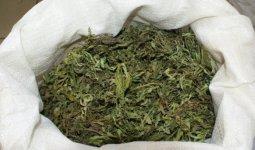 Три мешка марихуаны возил с собой житель Петропавловска