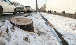 «Деревья не выживут»: экоактивисты бойкотировали акцию акимата Алматы