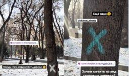 Алматинцы опасаются вырубки деревьев в парке 28 панфиловцев