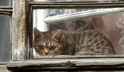Мужчина приревновал супругу к котам и выбросил их из окна
