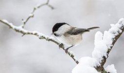 Морозы возвращаются на север Казахстана
