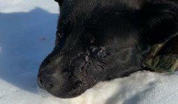 Живодеры выжгли глаза собаке в Шымкенте
