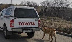 «Привязал к машине и катался»: волонтеры заявили об издевательстве над собакой в Алматы