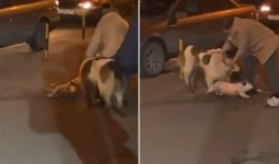 Алабай напал на пожилуюастанчанку со щенком