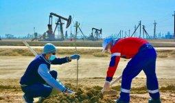 3 тысячи саженцев высадили нефтяники АО «Каражанбасмунай» в Мангистауской области