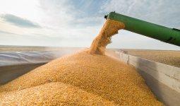 Казахстан увеличил экспорт пшеницы за рубеж