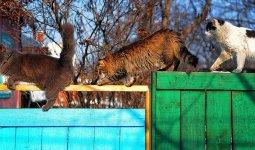 Теплый воздух принесет в Казахстан циклон из Атлантики
